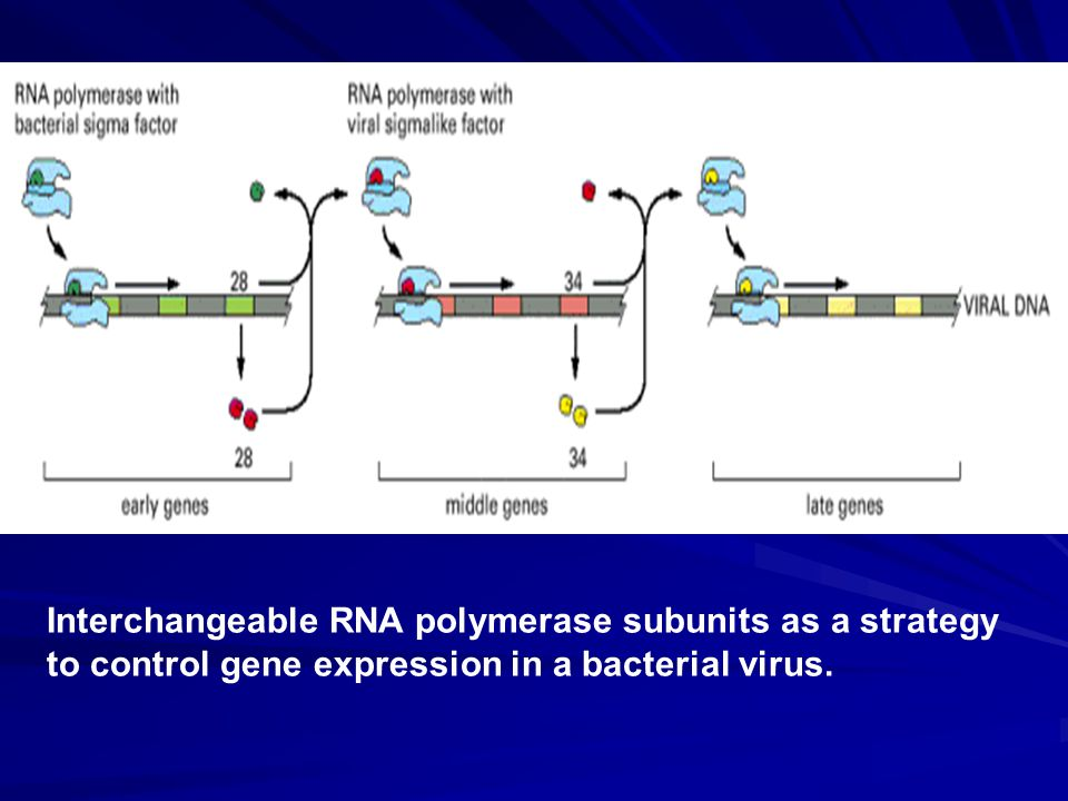Interchangeable RNA polymerase subunits as a strategy