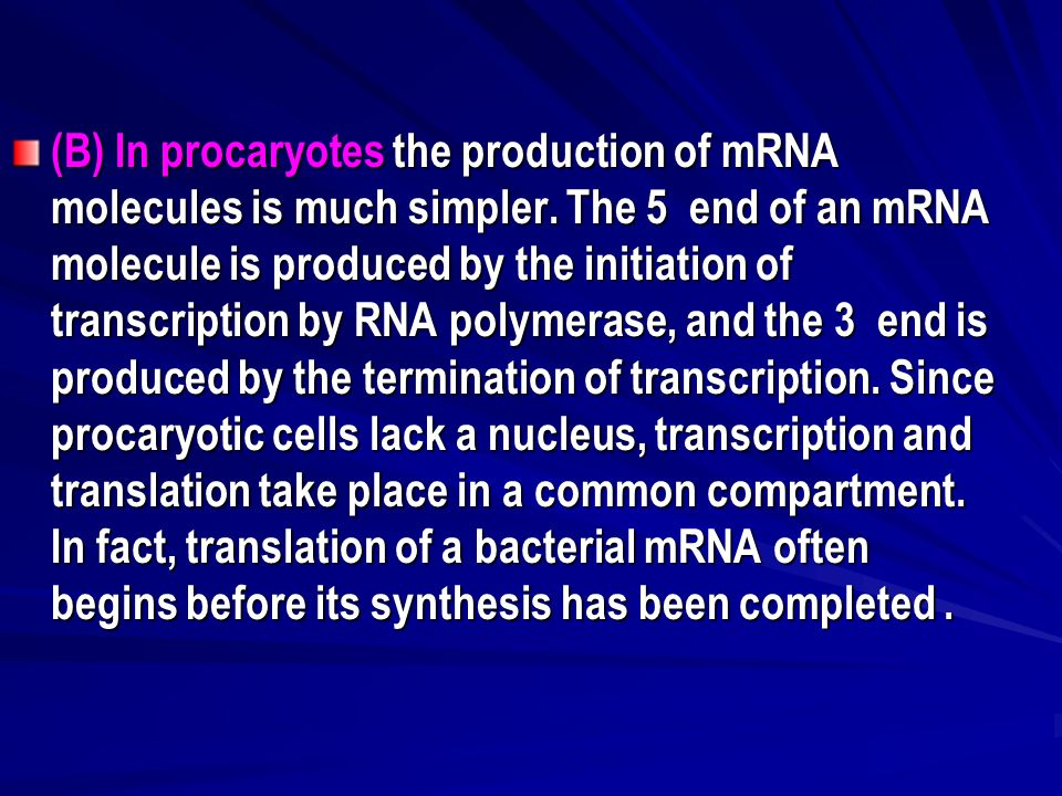 (B) In procaryotes the production of mRNA molecules is much simpler