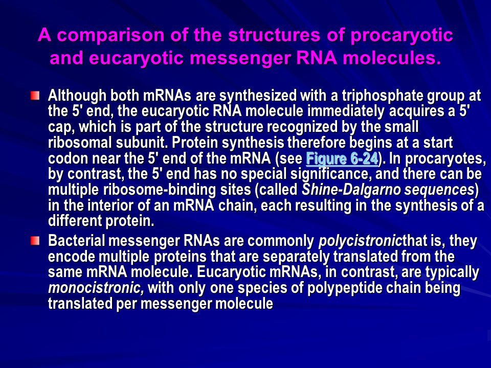 A comparison of the structures of procaryotic and eucaryotic messenger RNA molecules.