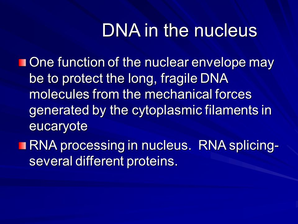 DNA in the nucleus