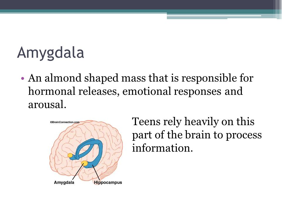 Amygdala An almond shaped mass that is responsible for hormonal releases, emotional responses and arousal.
