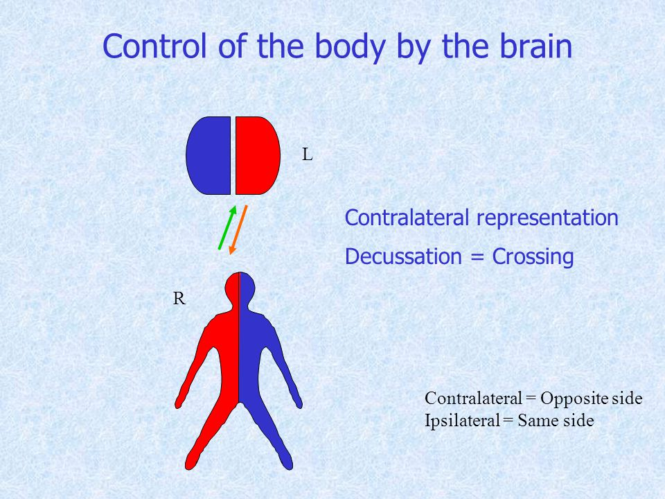 Control of the body by the brain