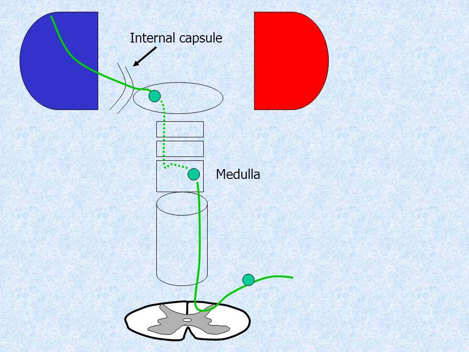 Medulla Internal capsule