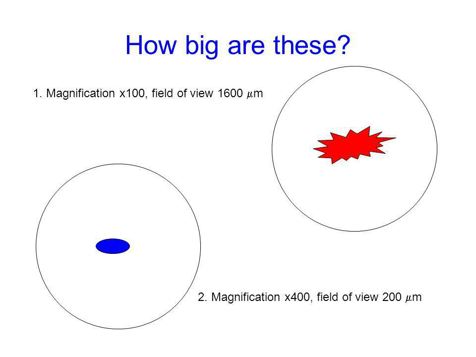 How big are these 1. Magnification x100, field of view 1600 m