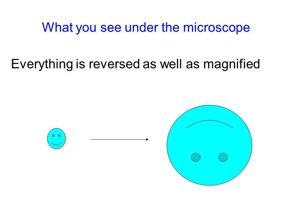 What you see under the microscope