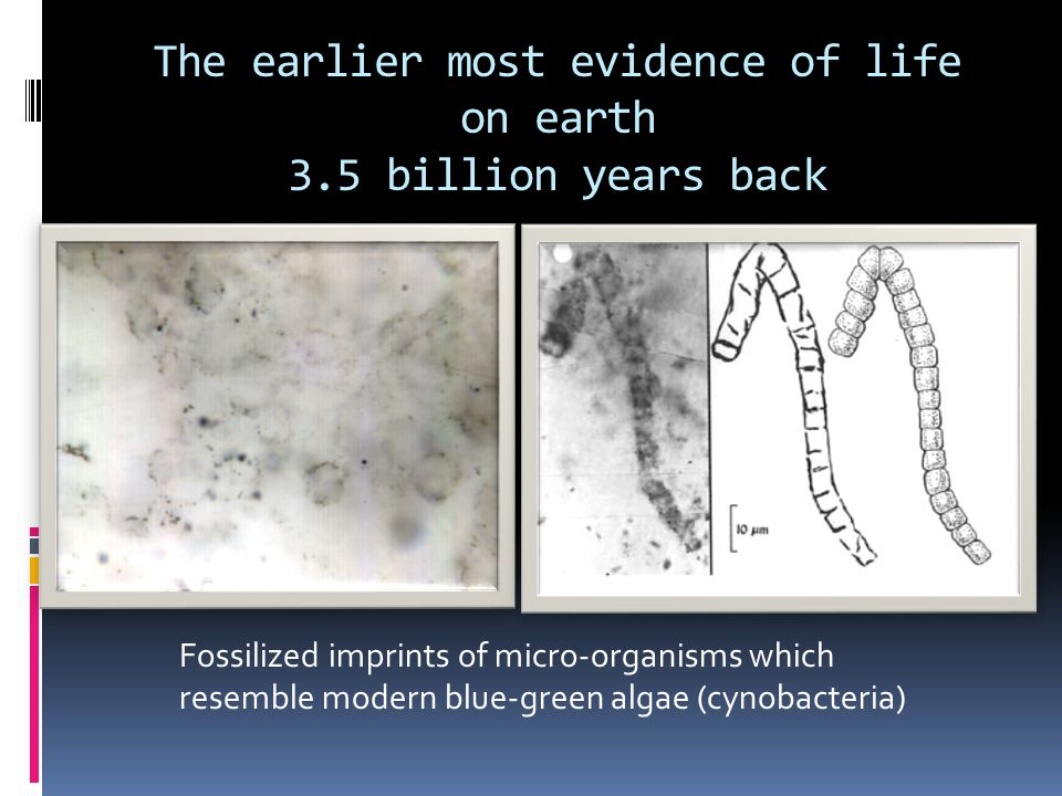 The earlier most evidence of life on earth 3.5 billion years back