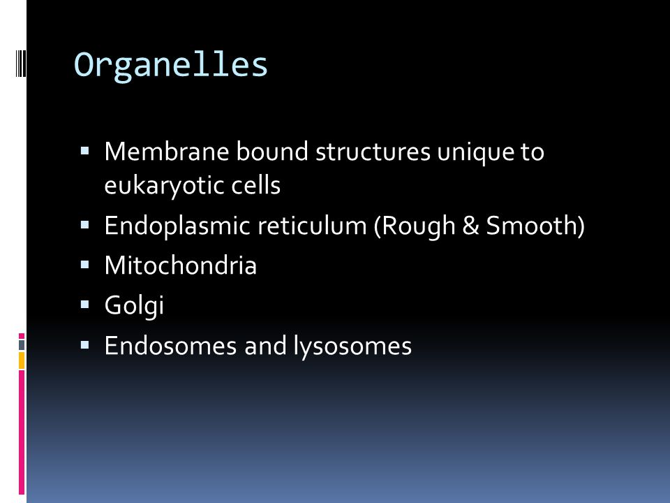 Organelles Membrane bound structures unique to eukaryotic cells
