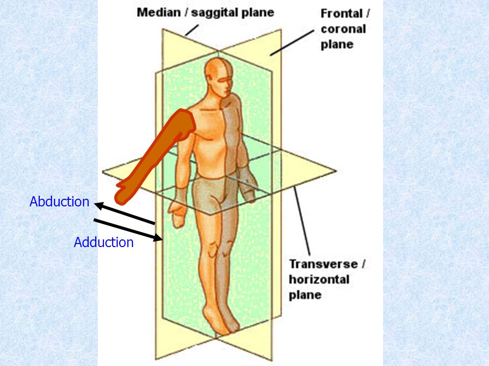 Abduction Adduction
