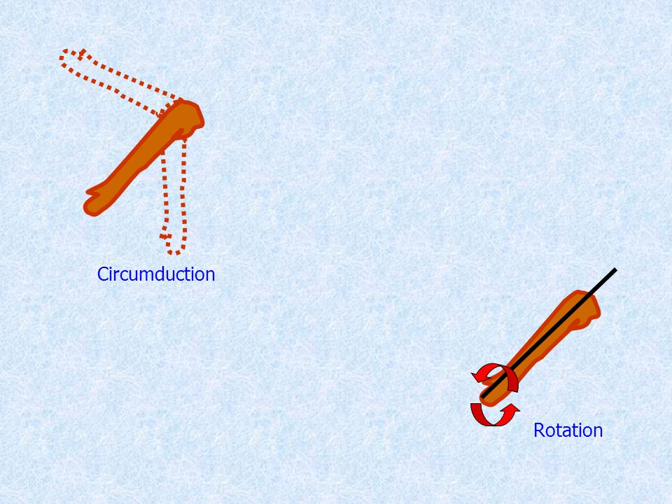 Circumduction Rotation