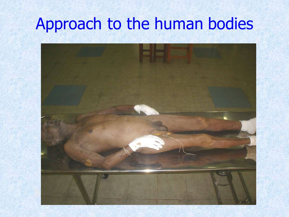 Approach to the human bodies