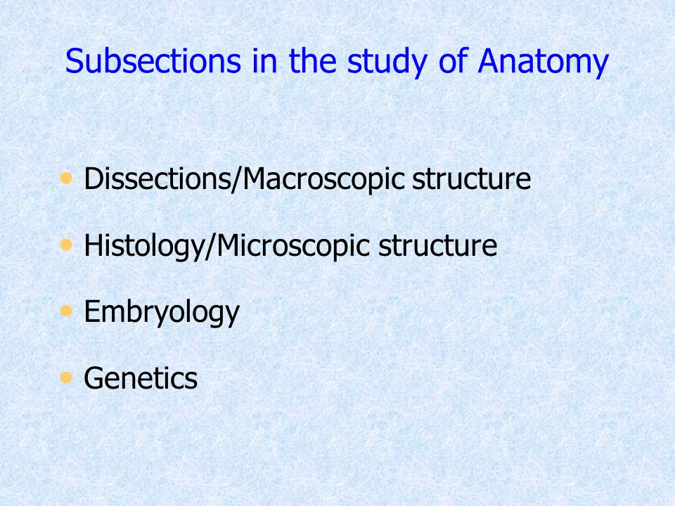 Subsections in the study of Anatomy
