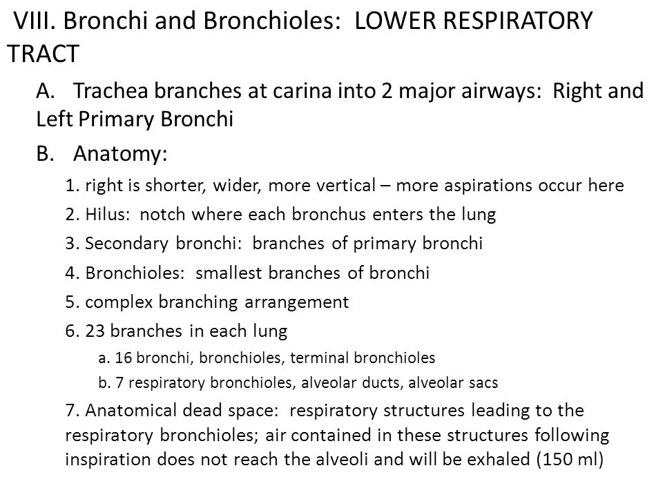 VIII. Bronchi and Bronchioles: LOWER RESPIRATORY TRACT