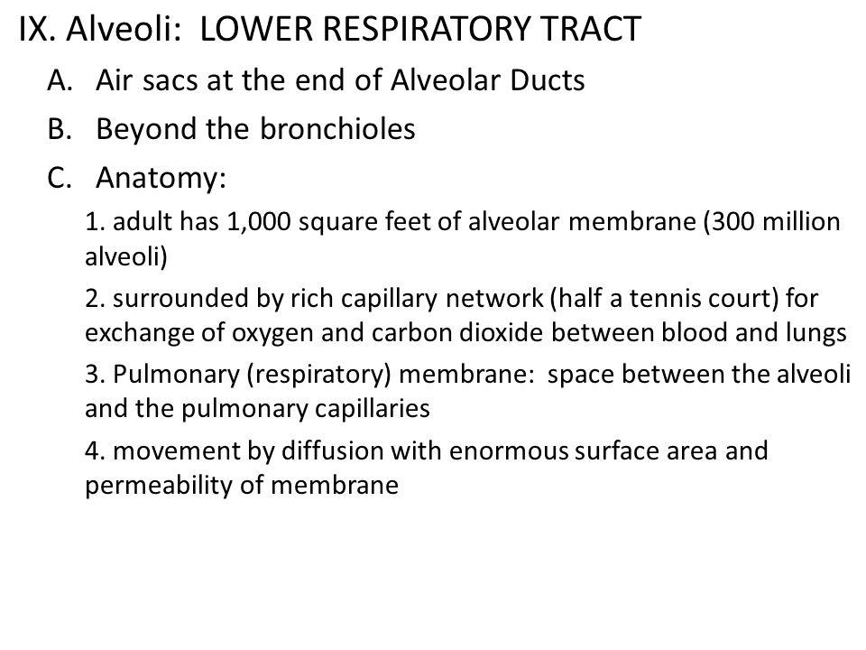 IX. Alveoli: LOWER RESPIRATORY TRACT