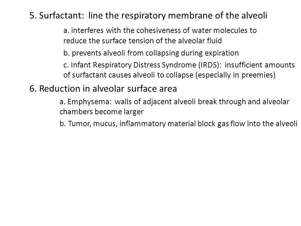 5. Surfactant: line the respiratory membrane of the alveoli
