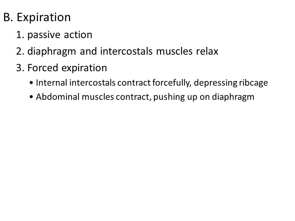 B. Expiration 1. passive action