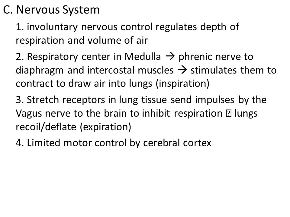 C. Nervous System 1. involuntary nervous control regulates depth of respiration and volume of air.