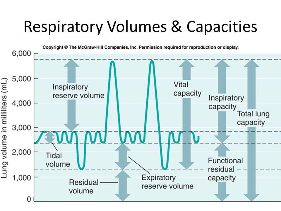 Respiratory Volumes & Capacities