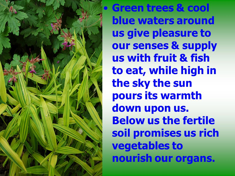 Green trees & cool blue waters around us give pleasure to our senses & supply us with fruit & fish to eat, while high in the sky the sun pours its warmth down upon us.
