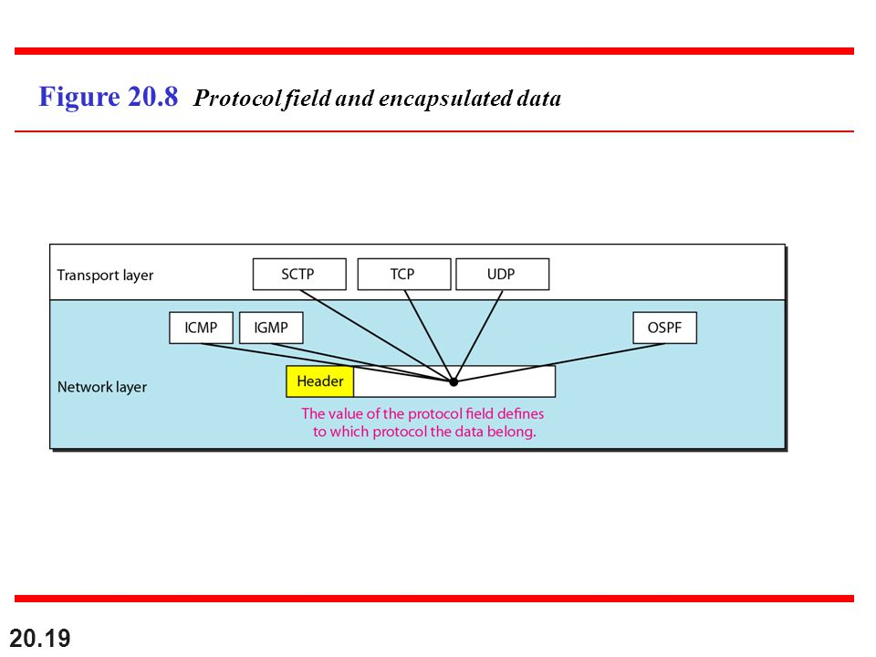 Figure 20.8 Protocol field and encapsulated data