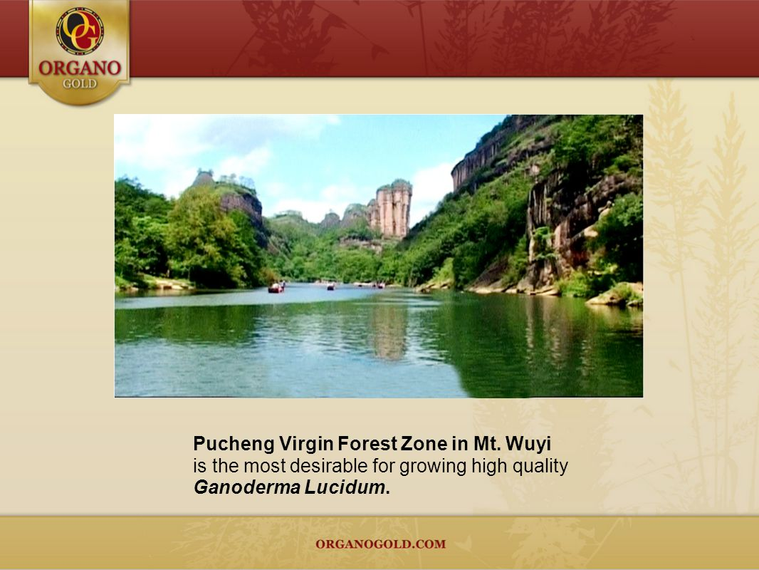Pucheng Virgin Forest Zone in Mt. Wuyi