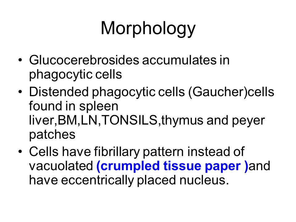 Morphology Glucocerebrosides accumulates in phagocytic cells