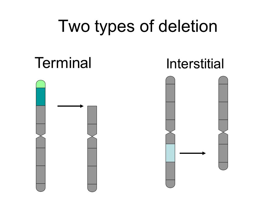 Two types of deletion Terminal Interstitial