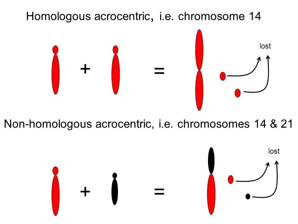 + = + = Homologous acrocentric, i.e. chromosome 14
