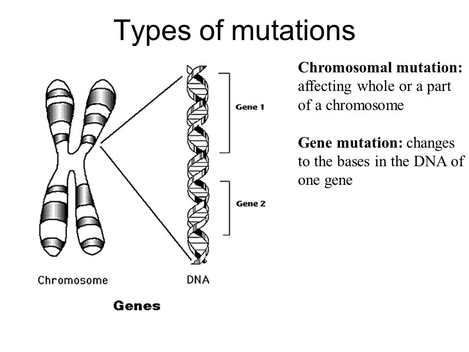 Types of mutations Chromosomal mutation: affecting whole or a part of a chromosome.