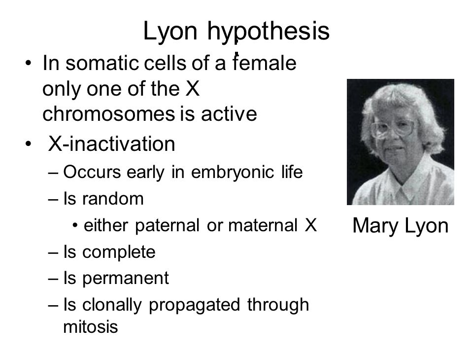 Lyon hypothesis: In somatic cells of a female only one of the X chromosomes is active. X-inactivation.
