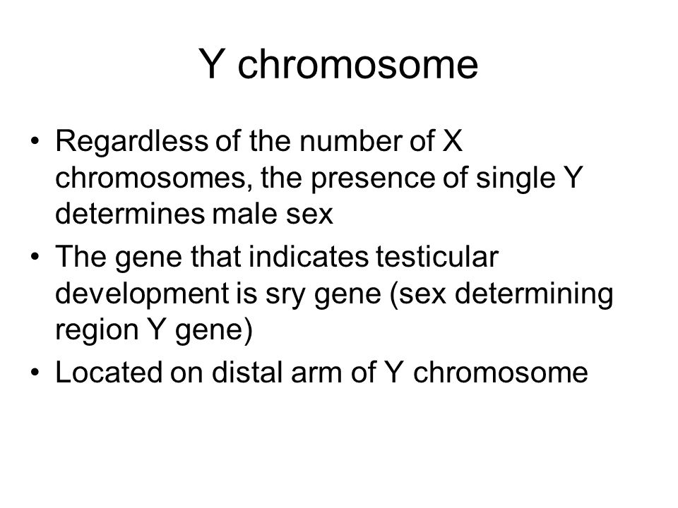Y chromosome Regardless of the number of X chromosomes, the presence of single Y determines male sex.