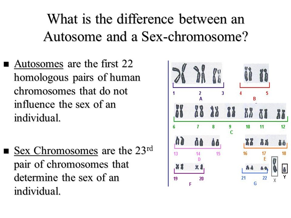 What is the difference between an Autosome and a Sex-chromosome