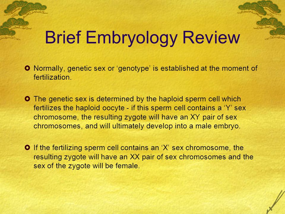 Brief Embryology Review