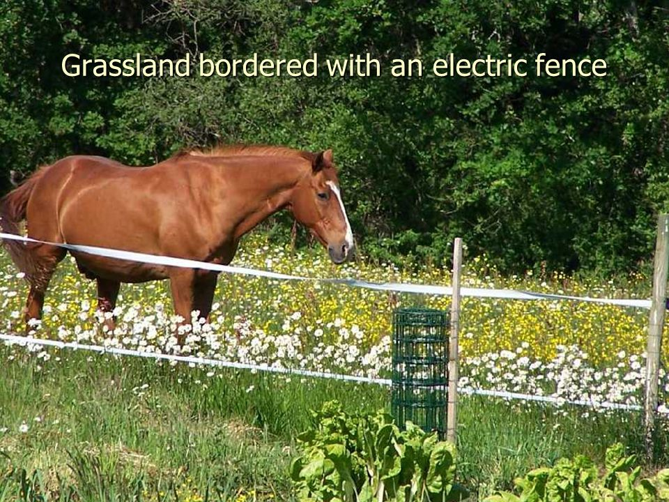 Grassland bordered with an electric fence