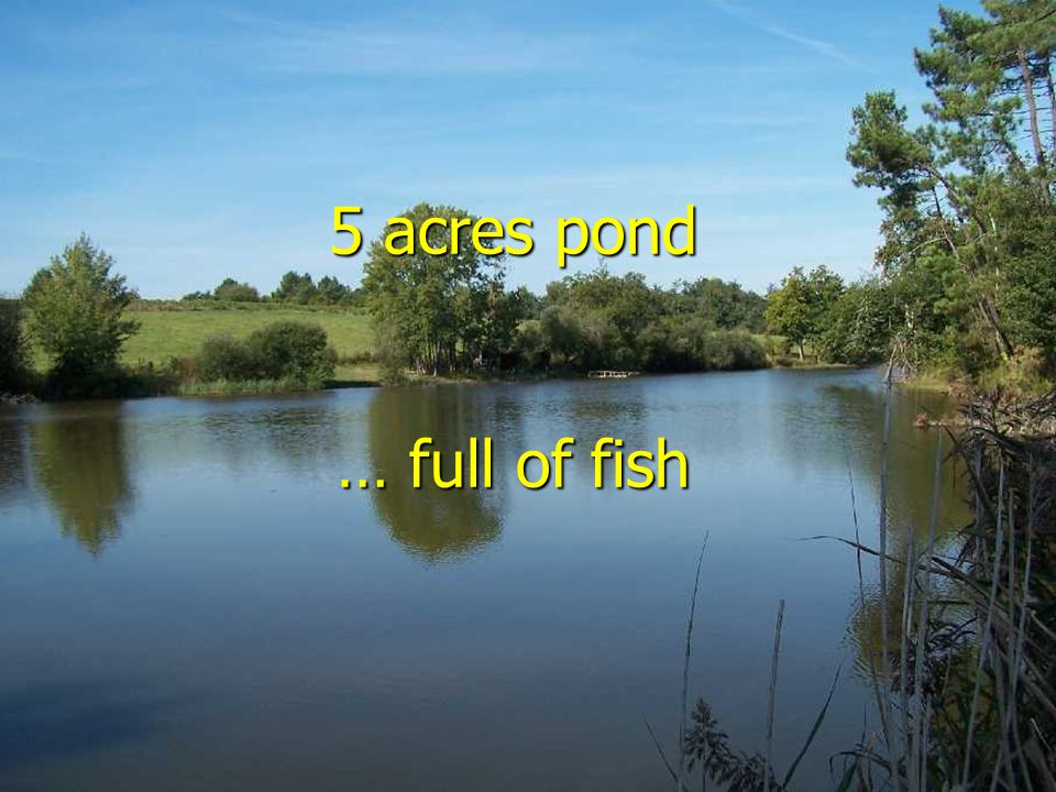 5 acres pond … full of fish