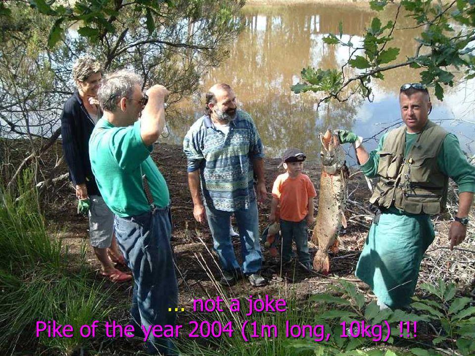 ... not a joke Pike of the year 2004 (1m long, 10kg) !!!