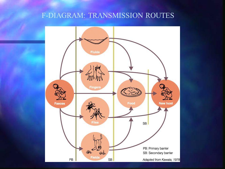 F-DIAGRAM: TRANSMISSION ROUTES