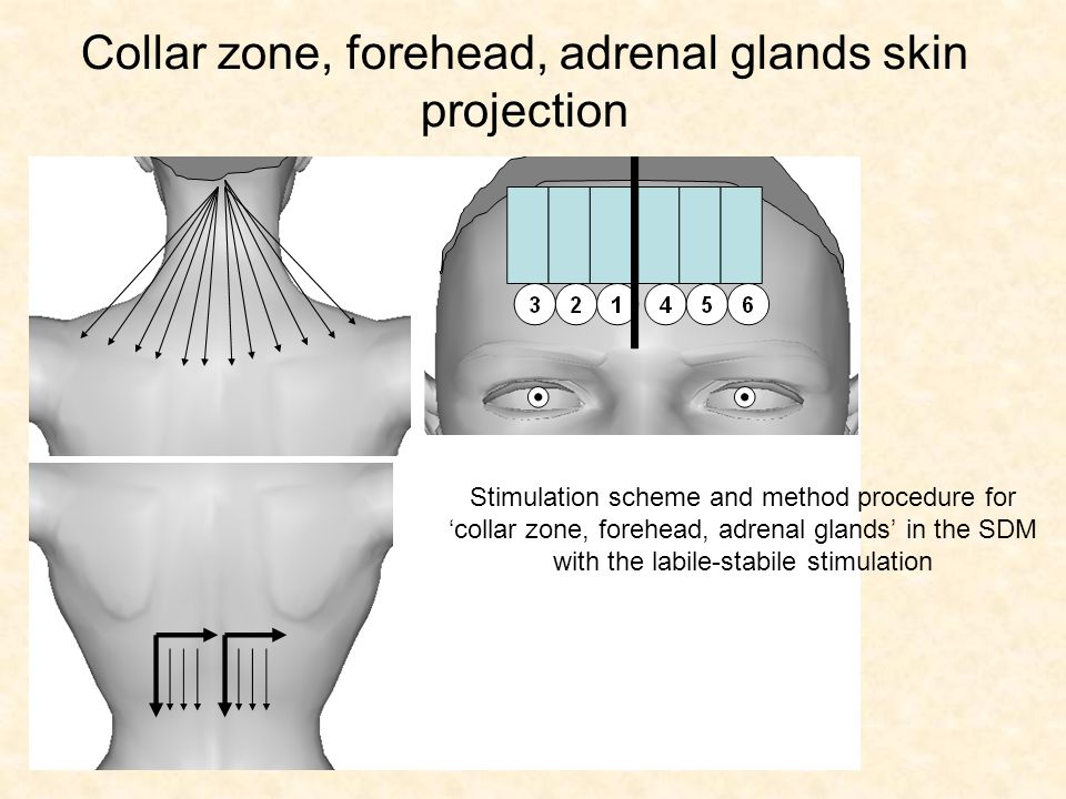 Collar zone, forehead, adrenal glands skin projection