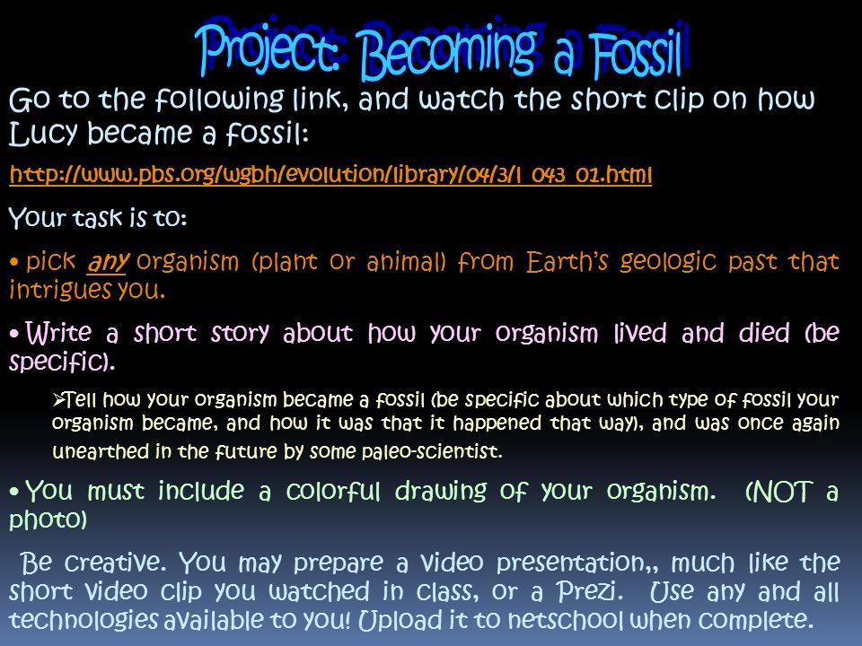 Project: Becoming a Fossil