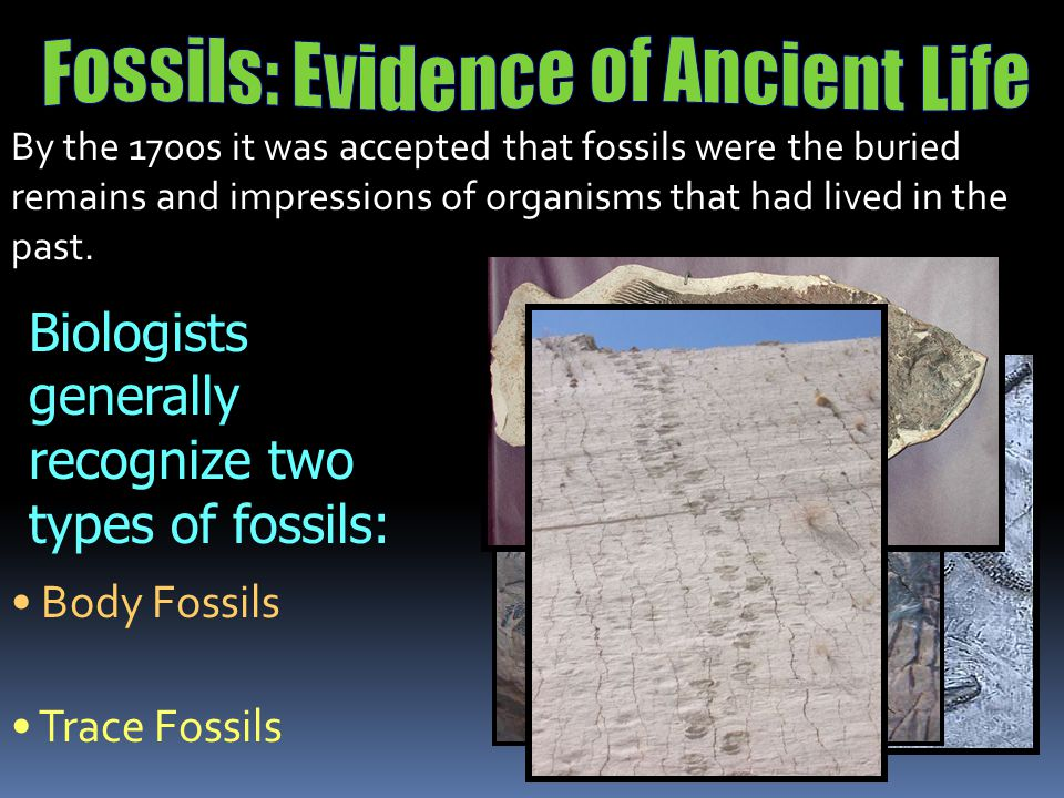 Fossils: Evidence of Ancient Life