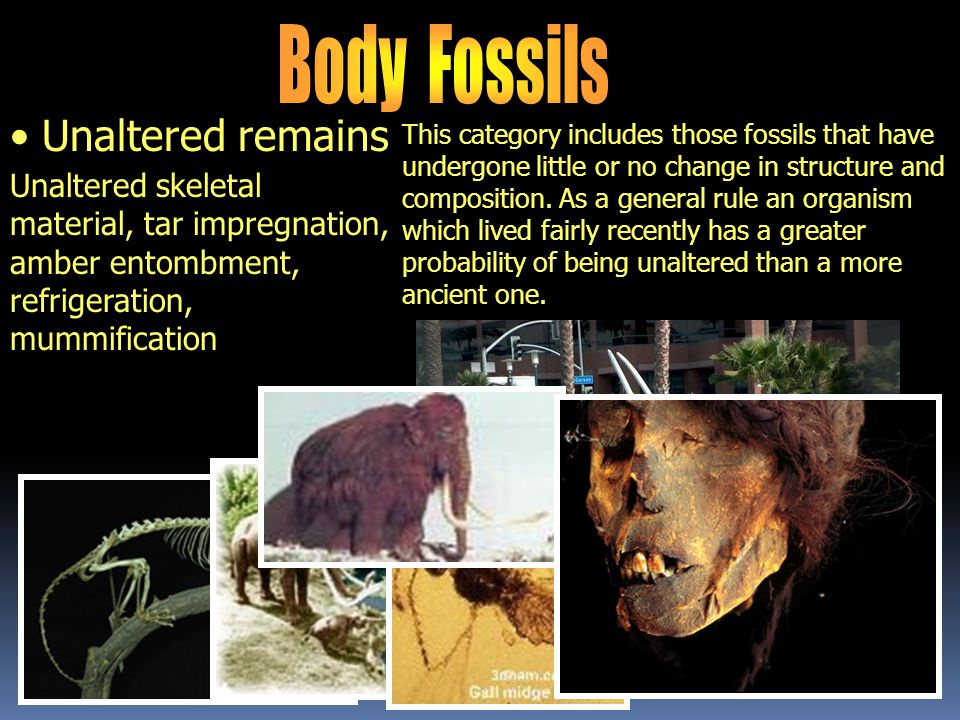 Body Fossils Unaltered remains