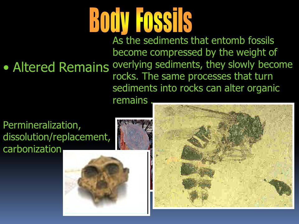 Body Fossils Altered Remains