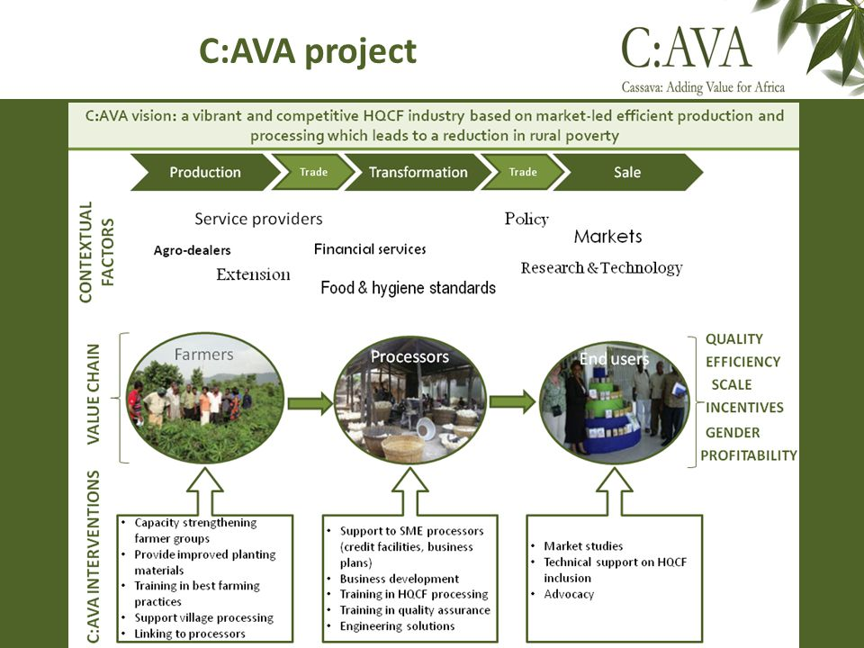 C:AVA project