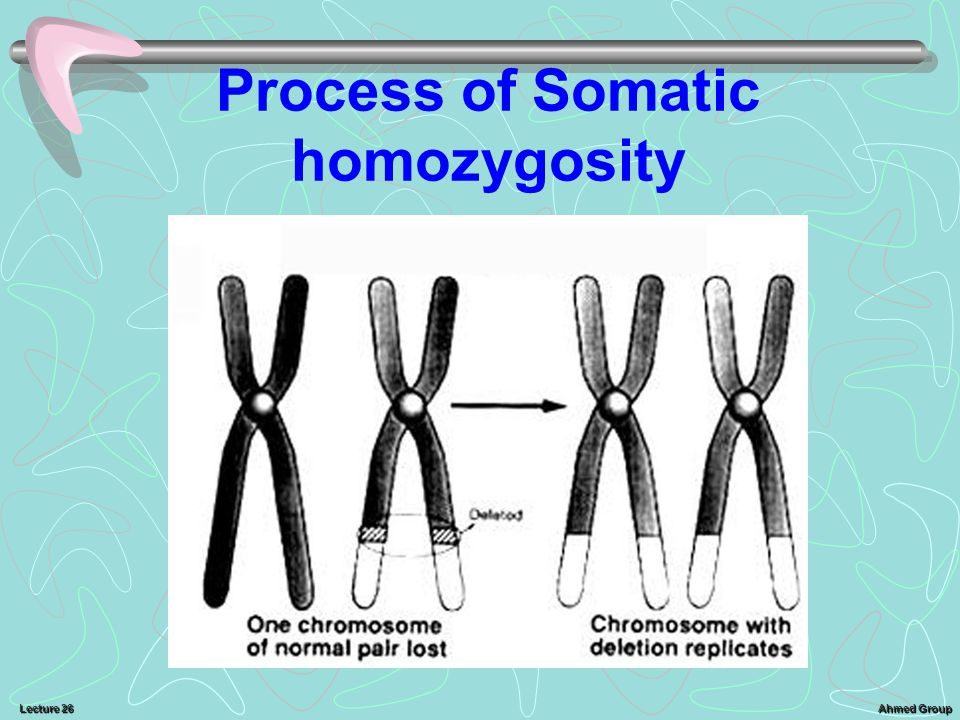 Process of Somatic homozygosity