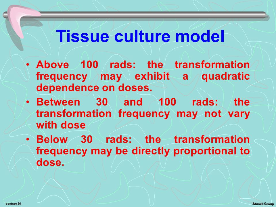 Tissue culture model Above 100 rads: the transformation frequency may exhibit a quadratic dependence on doses.