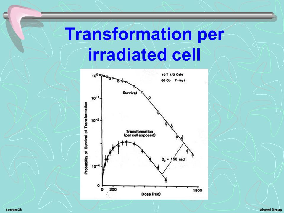 Transformation per irradiated cell