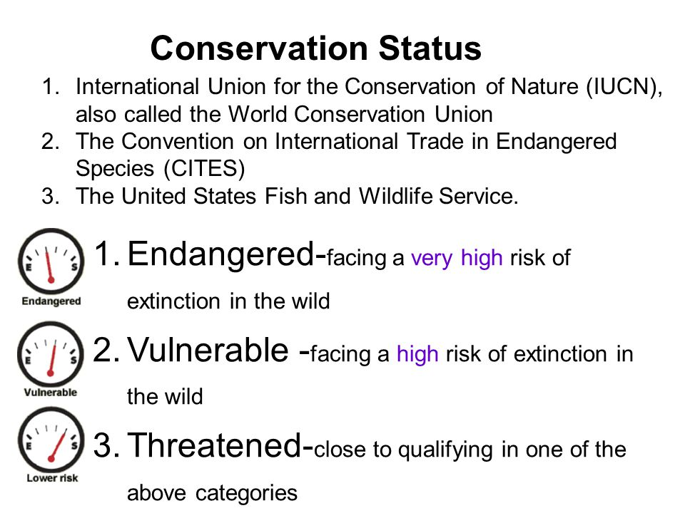 Endangered-facing a very high risk of extinction in the wild