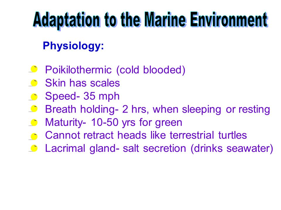 Adaptation to the Marine Environment