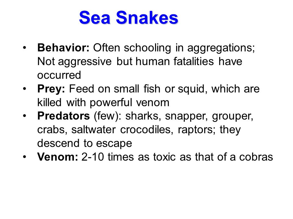 Sea Snakes Behavior: Often schooling in aggregations; Not aggressive but human fatalities have occurred.