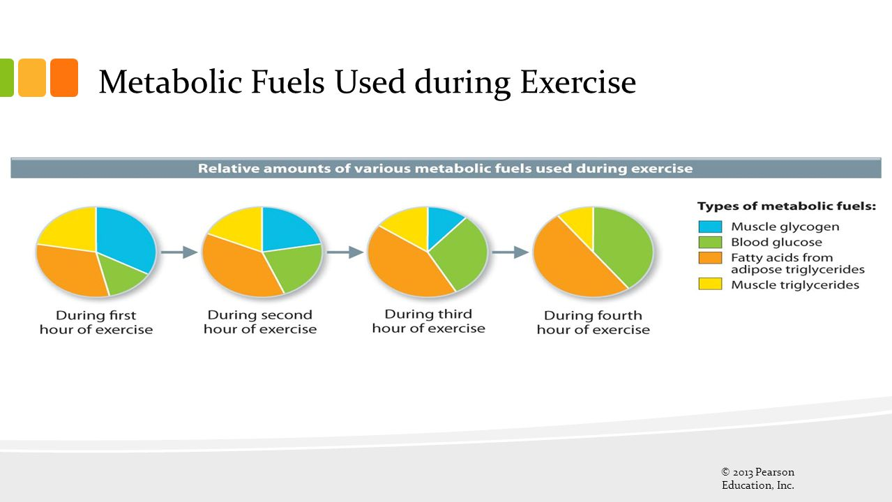 Metabolic Fuels Used during Exercise