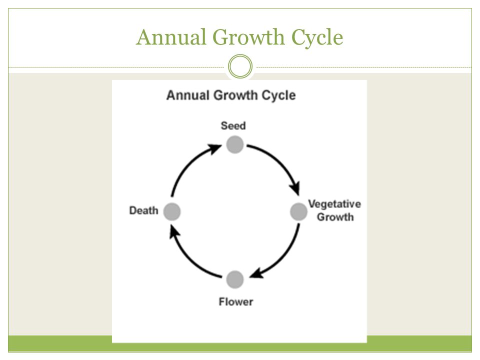 Annual Growth Cycle